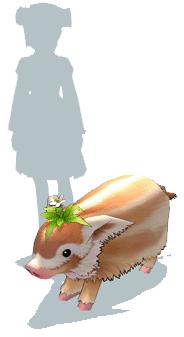 Mabinogi Clover Pig Size Comparison