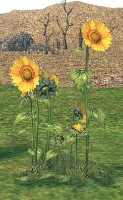 Mabinogi Homestead Young Sunflower Patch