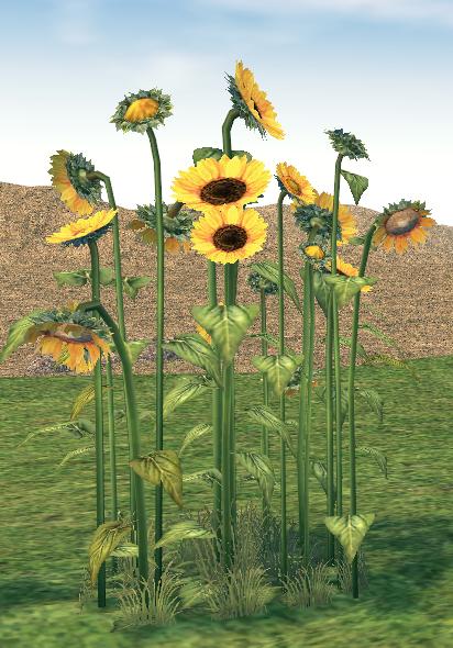 Mabinogi Homestead Abundant Sunflower Patch