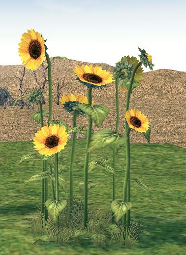 Mabinogi Homestead Large Sunflower Patch